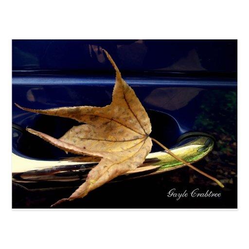 Fall foliage, Tennessee autumn leaf Post Card