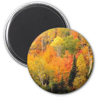 Fall Foliage Valley Magnet