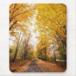 Fall Foliage Walking Path Mouse Pad