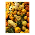 Fall Gourds Post Card