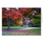 Fall in the Public Garden