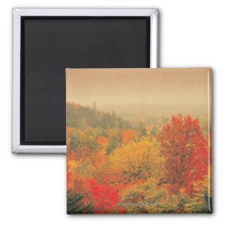 Fall landscape, New Hampshire, USA Square Magnet