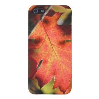 Fall Leaf 1 iPhone4 Case Case For iPhone 5