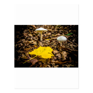 Fall Leaf and Mushrooms Post Card