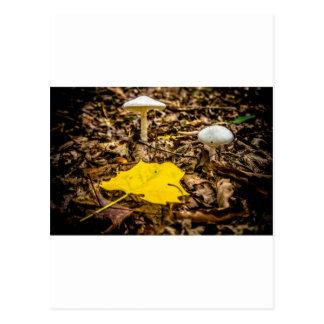 Fall Leaf and Mushrooms Postcard