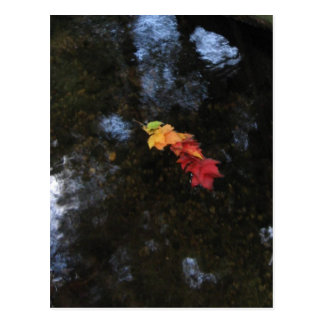 Fall Leaf Chain Postcard