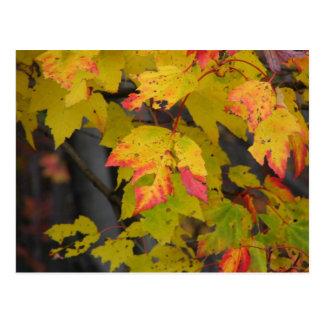 Fall Leaf III Postcard