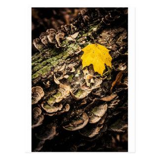 Fall Leaf on Log Postcard