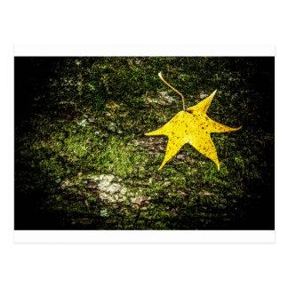 Fall Leaf on Moss Postcard
