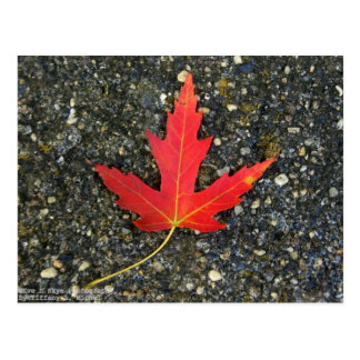 Fall Leaf Postcard