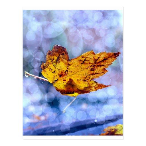 Fall Leaf Post Cards