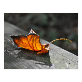 Fall Leaf Postcard