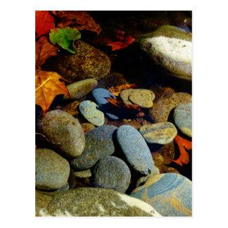 Fall leaf with Rocks in mountain creek Postcard