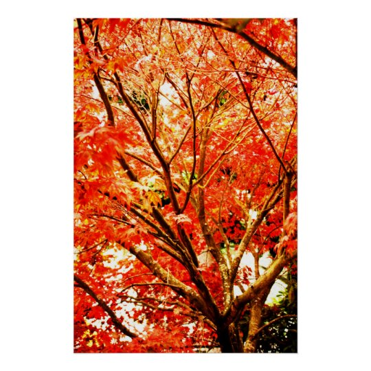 fall leaves 002 poster