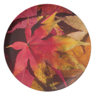 Fall leaves, autumn colours custom melamine plate