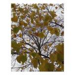 Fall Leaves Custom Flyer