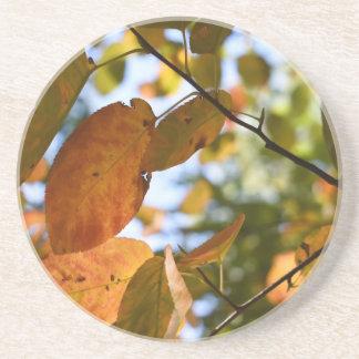 Fall Leaves Leaf Peeping Autumn Nature Photography Coaster