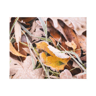 Fall leaves photography canvas print