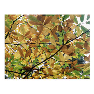 Fall Leaves Postcard
