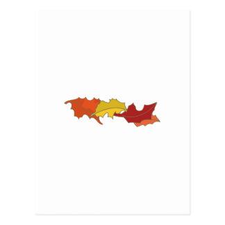 Fall Leaves Postcard