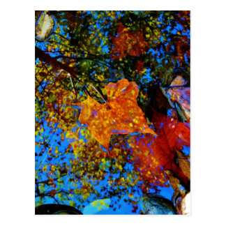 Fall leaves & reflection Fall leaf with Rocks in m Postcard