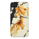 fall maple leaves iphone 4 case
