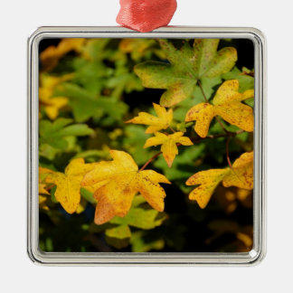 Fall maple leaves Silver-Colored square decoration