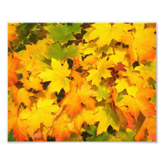 Fall Maple Leaves with Autumn Colors Photograph
