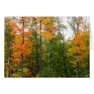 Fall Maple Trees Autumn Nature Photography Card