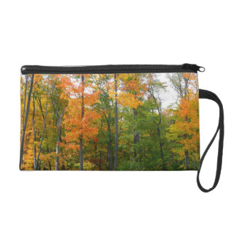 Fall Maple Trees Autumn Nature Photography Wristlet
