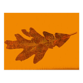 """Fall Oak Leaf"" Country Roads Postcard"