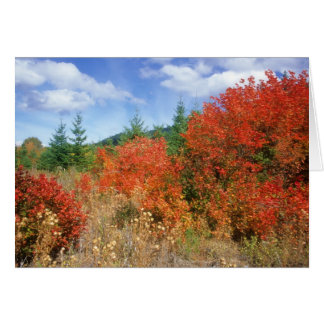 Fall on Mount Hood Note Card