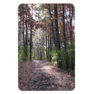 Fall path rectangular photo magnet