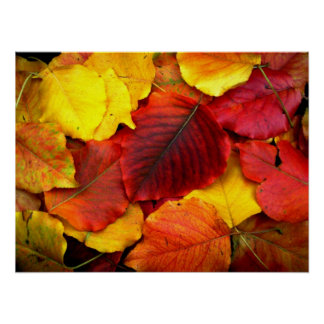 Fall Pear Leaves Poster