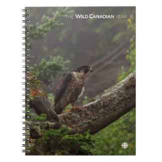 Fall - Peregrine Falcon Notebooks