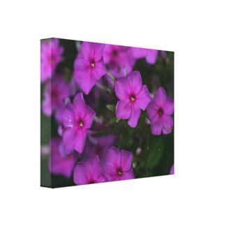 Fall Phlox Pink Wildflower Floral Canvas Print