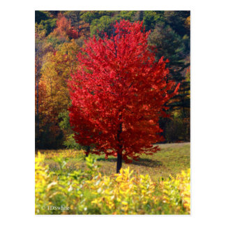 Fall Pictures Postcard