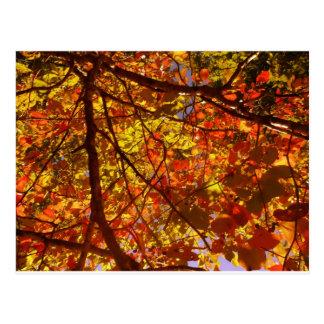 Fall Postcard