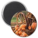 Fall Pumpkin Harvest 6 Cm Round Magnet