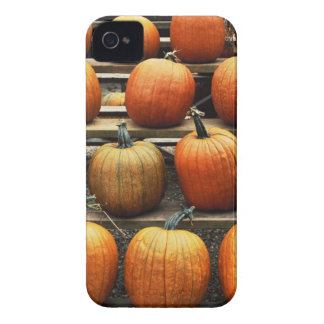 Fall pumpkins iPhone 4 case