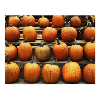 Fall pumpkins postcard
