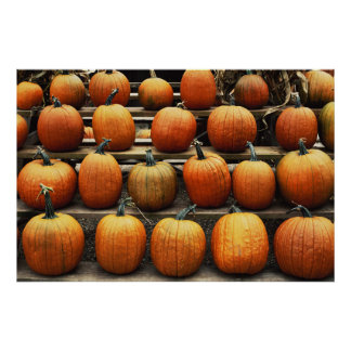 Fall pumpkins poster