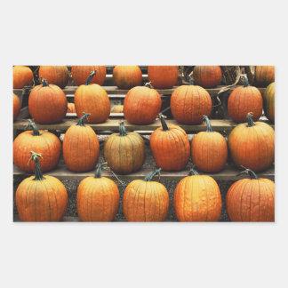 Fall pumpkins rectangular sticker