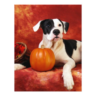 Fall puppy flyers