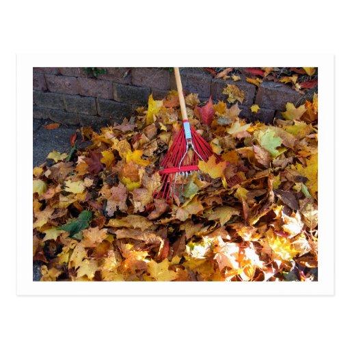 Fall - Raking the Leaf Harvest , Photograph Postcards