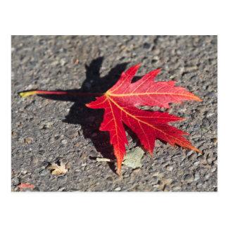 Fall: Red Leaf in Sunshine Postcard