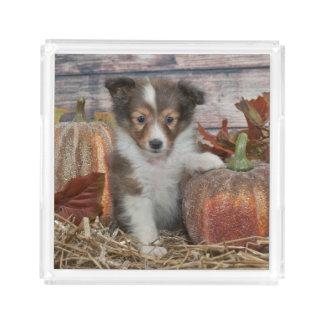 Fall Sheltie Puppy Acrylic Tray