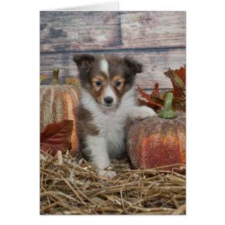 Fall Sheltie Puppy Card