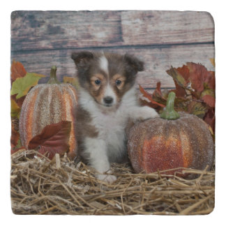 Fall Sheltie Puppy Trivet