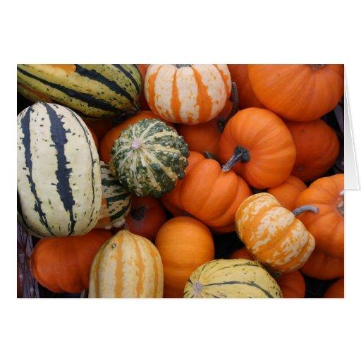 Fall Squash Harvest Greeting Cards